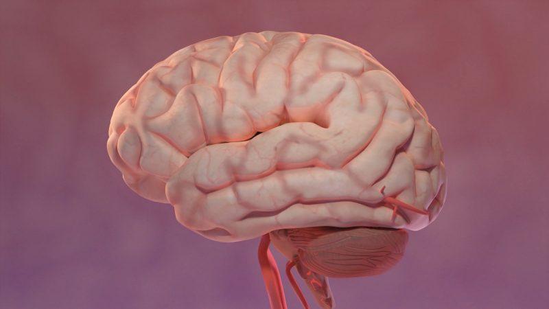 Brain Surgery: Medical Animation